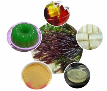 ágar-ágar, substância retirada de algas vermelhas (imagem no centro), que serve para produzir alimentos, meio de cultura e é usada na ponde salina