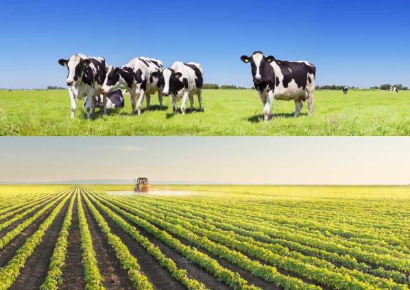 Agricultura e pecuária designam duas importantes atividades econômicas do setor primário.