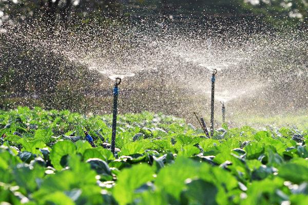 A agricultura é a atividade econômica que mais consome água