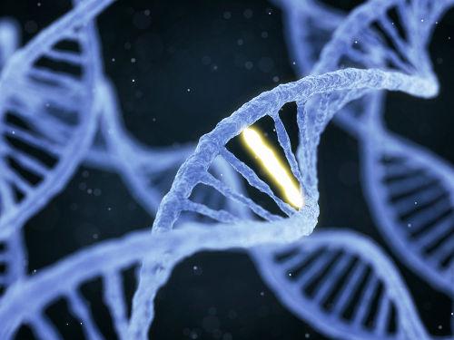 Alterações no DNA podem causar mudanças significativas em um organismo