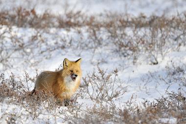 Ambiente natural da Tundra