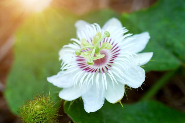 As angiospermas são plantas que apresentam flores e frutos.