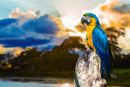No Brasil, há uma abundância de espécies anmais espalhadas por todo o território.