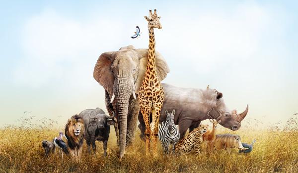 Como se fala as espécies de animais na língua inglesa?