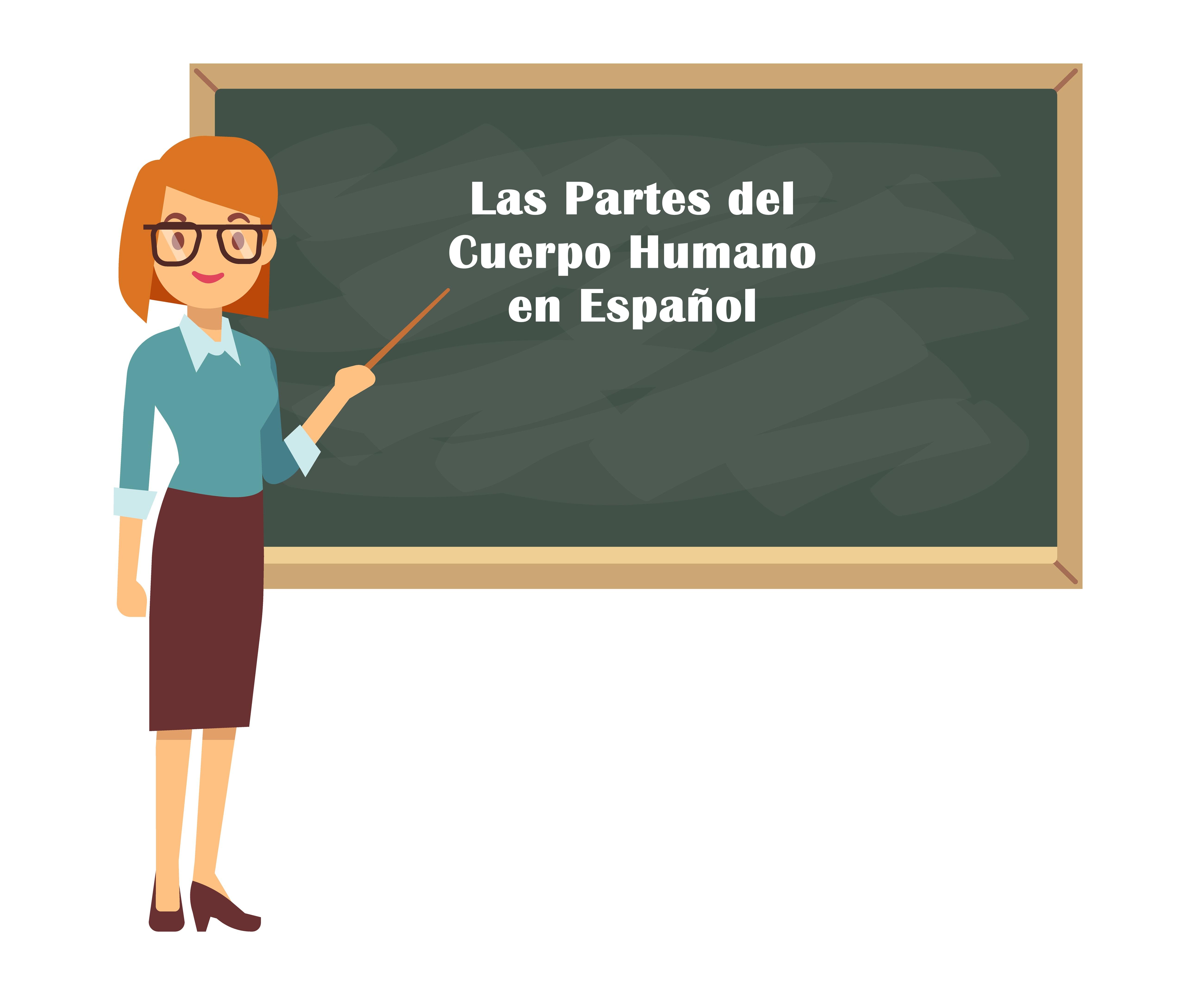 Aprenda as partes do corpo humano em Espanhol