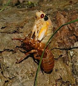 O artrópode sofre mudas periodicamente para que seu corpo aumente de tamanho