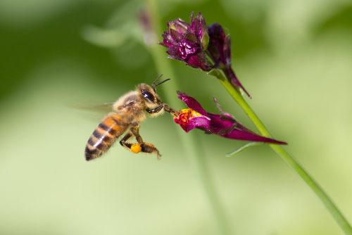 As abelhas são um dos principais agentes polinizadores conhecidos