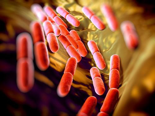 As bactérias mais aptas sobrevivem quando expostas a antibióticos