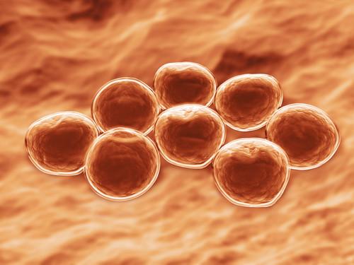As bactérias podem ser classificadas de acordo com a forma e afinidade colonial das bactérias.