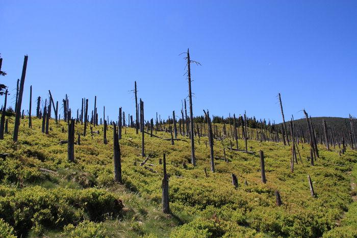 As chuvas ácidas causam um grande impacto ambiental, como mostra a destruição dos galhos e folhas dessas árvores de montanhas polonesas