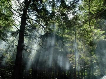 As florestas são recursos naturais renováveis.