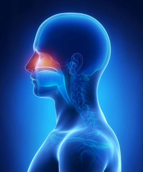 As moléculas de cheiro entram com o ar pelo nariz e são percebidas pelas células olfativas.
