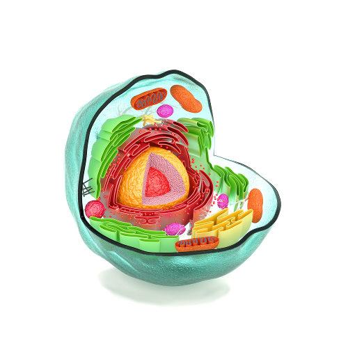 As organelas celulares funcionam como pequenos órgãos no interior de uma célula