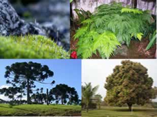 As plantas possuem diversas classificações