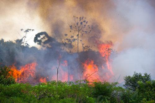 As queimadas afetam diretamente o solo e causam a poluição do ar
