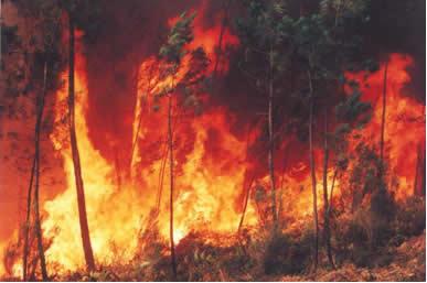 As queimadas constituem reações de combustão incompletas