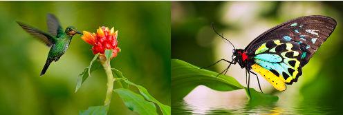 Asas de insetos e de pássaros apresentam a mesma função, mas não a mesma origem embrionária