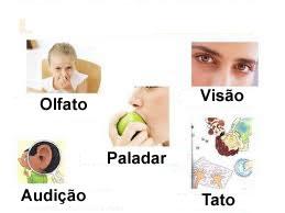 O sistema sensorial é formado pelos órgãos dos sentidos