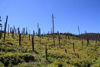 A chuva ácida pode causar vários estragos ambientais, como a destruição de folhas e galhos das árvores