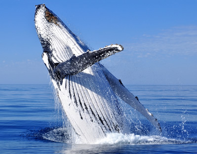 Os animais vertebrados são aqueles pertencentes ao filo dos cordados.