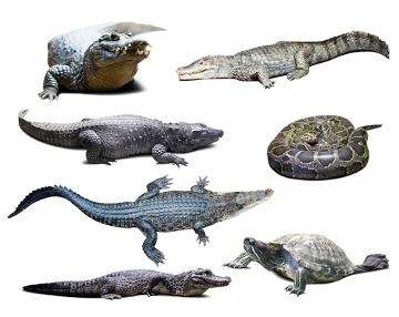 A macroevolução estuda a evolução em uma escala maior, como a origem dos répteis