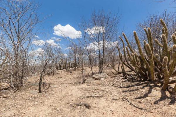 A Caatinga concentra-se na Região Nordeste do país, cujo clima é semiárido. Sua vegetação apresenta características adaptadas à escassez de chuva.