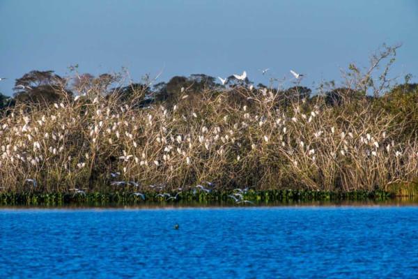 O Pantanal é um dos biomas brasileiros com maior exuberância e biodiversidade.