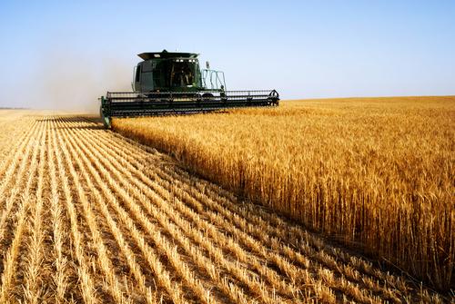 Estados Unidos e União Europeia são destaques mundiais em produção agrícola