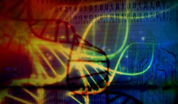 Se nenhum fator evolutivo intervir em uma população, as frequências gênicas e as proporções genotípicas não se alterarão