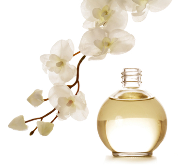 A arte da perfumaria acompanha a história da humanidade tal como a arte da culinária