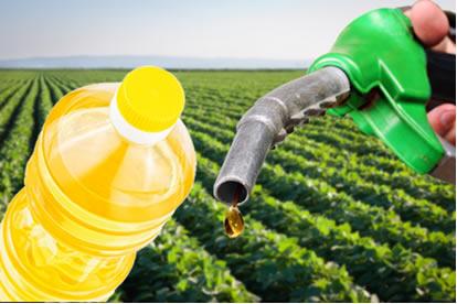 O óleo de soja é usado na alimentação em frituras e como matéria-prima do biodiesel
