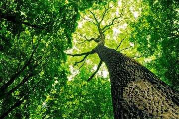 O Dia da Árvore é comemorado em 21 de setembro