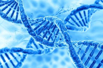 A compreensão de que o DNA carrega as informações básicas de cada indivíduo foi essencial para o desenvolvimento da Genética