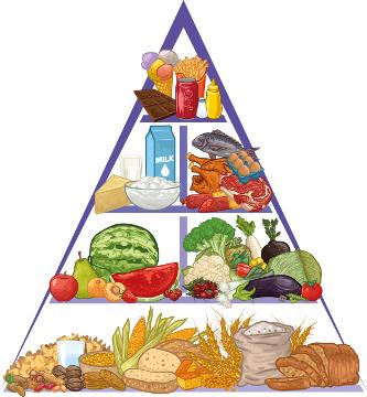 Pirâmide alimentar - Apresenta cada tipo de alimento que deve ser ingerido diariamente