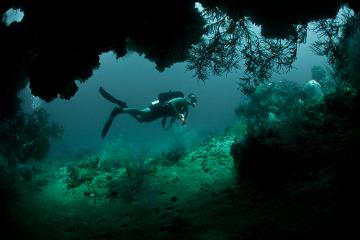 Mergulhadores que sobem rapidamente à superfície podem ter embolia gasosa