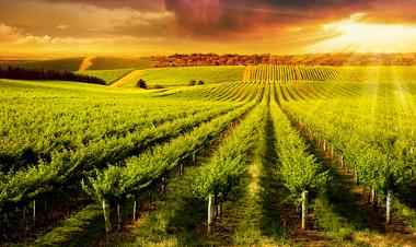 Os agrossistemas ajudam a transformar o espaço agrário