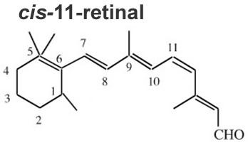 Molécula de cis-retinal