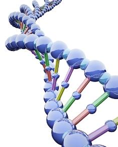 A sequência de bases nitrogenadas no DNA fornecerá informações para a produção de proteínas