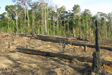 Um dos efeitos da expansão da fronteira agrícola é o desmatamento da Amazônia