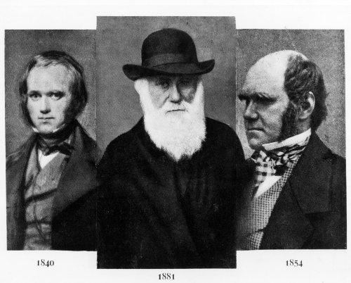 Darwin foi quem propôs a ideia da seleção natural