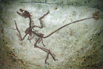 Os fósseis são uma ótima evidência de que as espécies sofrem modificações