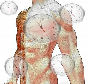 Todo ser vivo possui um ciclo de descanso e atividade relacionado aos períodos diurno e noturno
