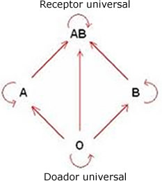 O esquema acima mostra os tipos sanguíneos e o doador e receptor universais