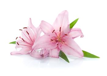 As flores tem como finalidade permitir ou potencializar a reprodução da planta