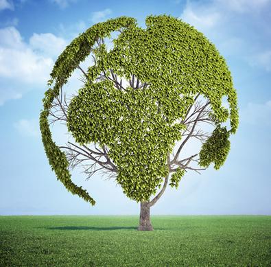 A partir da segunda metade do século XX, os países começaram a organizar reuniões e definir metas para minimizar os efeitos da degradação ambiental