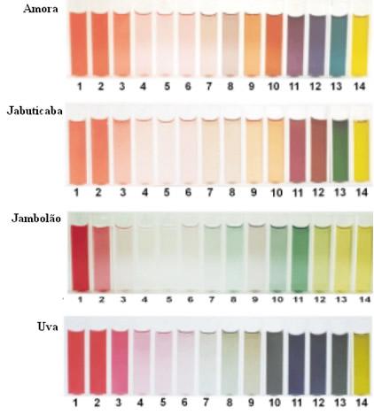 Escala de cores para diferentes pHs, obtida com o extrato de amora, jabuticaba, jambolão e uvas