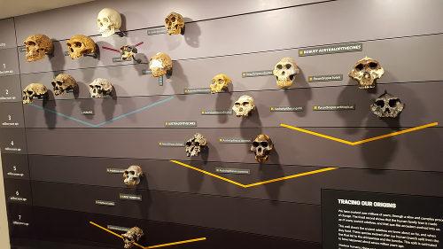 Especiação é o termo usado para indicar o processo de formação de novas espécies
