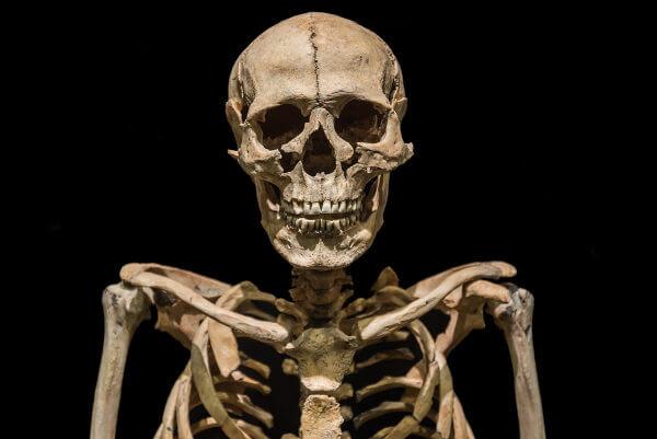 O esqueleto humano é um tipo de endoesqueleto, já que é encontrado no interior do nosso corpo.