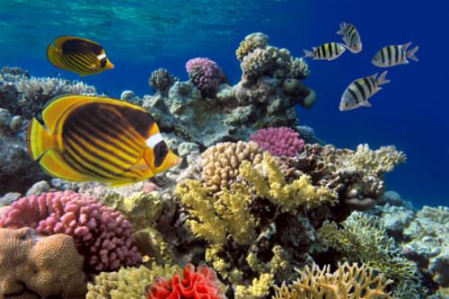 Estudar os organismos e suas interações é papel da Ecologia