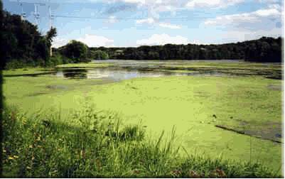 Ecossistema comprometido pela eutrofização